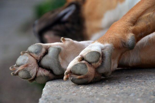 Genova: bocconi con puntine, per punire chi esce con un cane