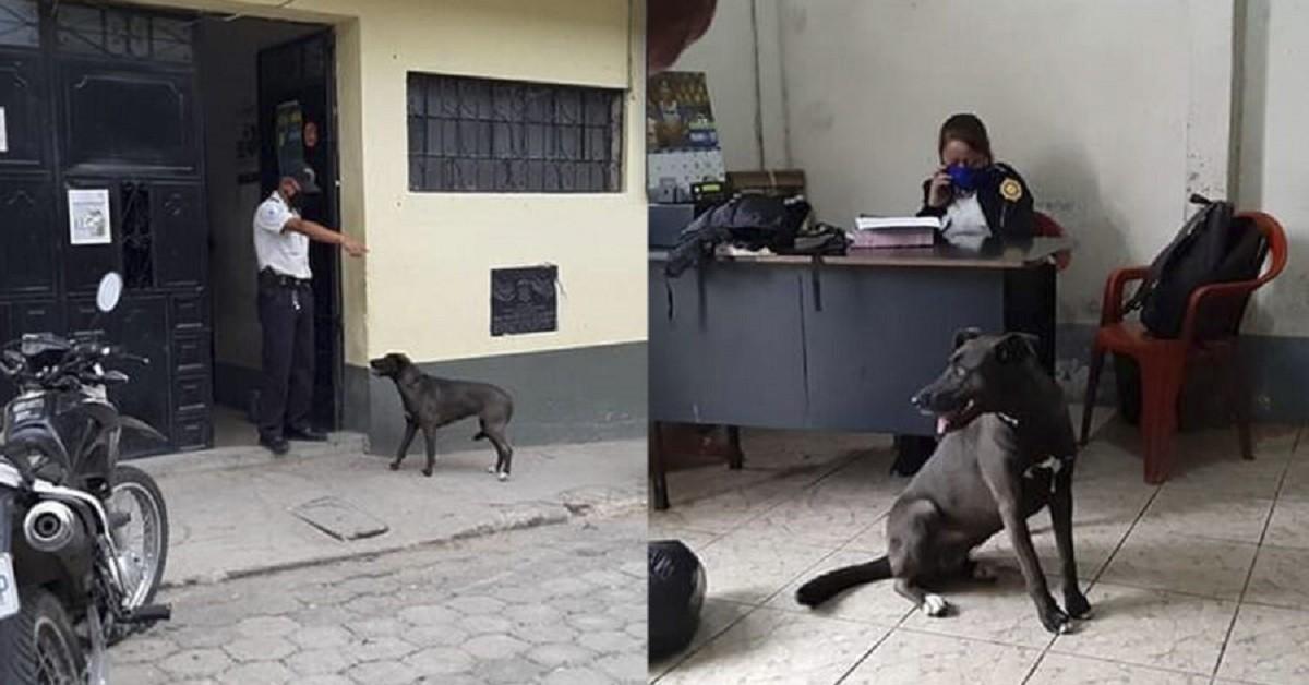 cane stazione polizia
