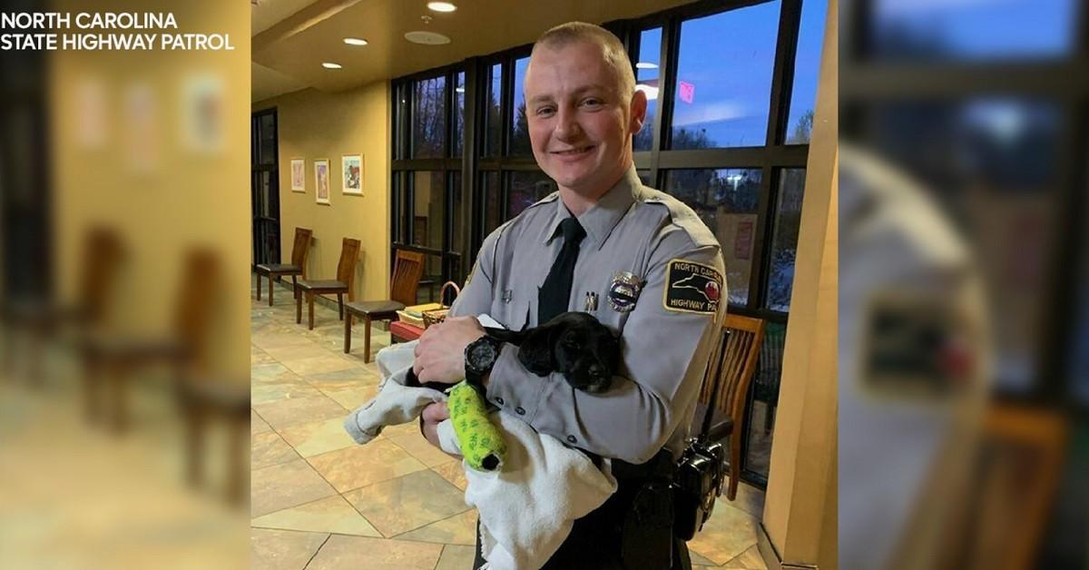 cane-rimasto-ferito-in-un-incidente-e-stato-adottato-dal-poliziotto-intervenuto-sul-posto
