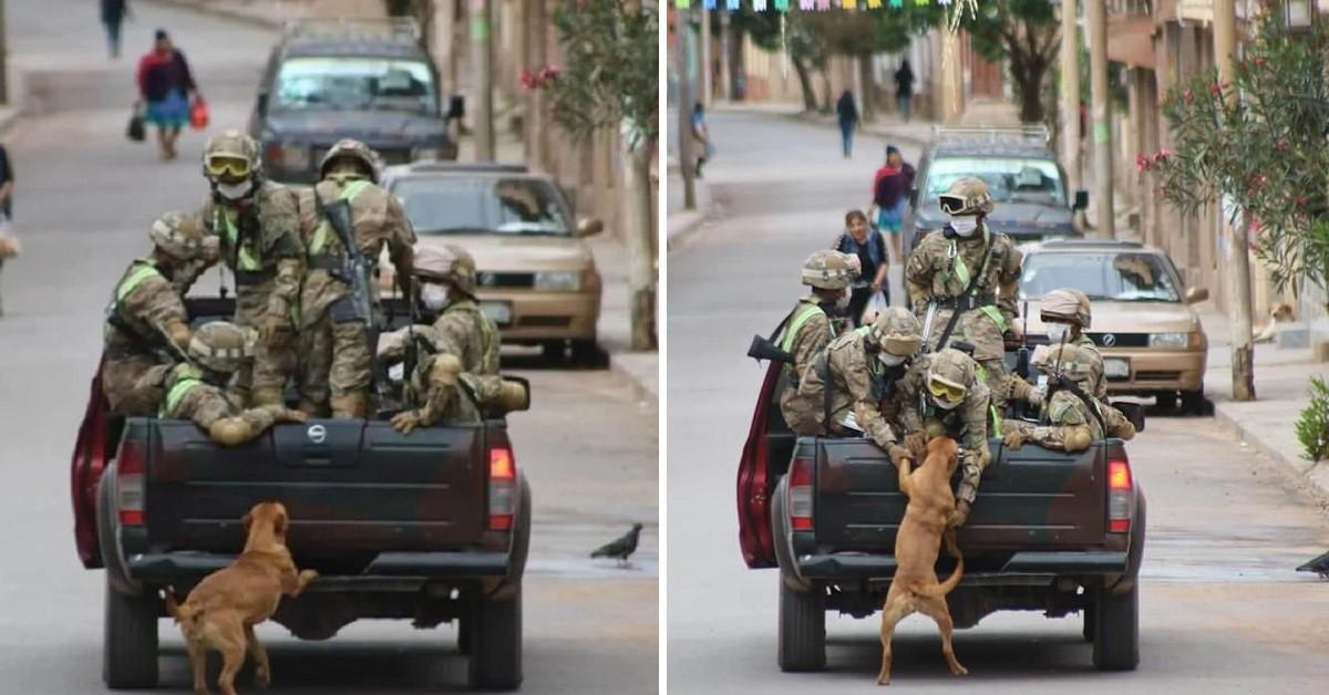 Cani abbandonati inseguono le auto dei militari e vengono adottati (VIDEO)
