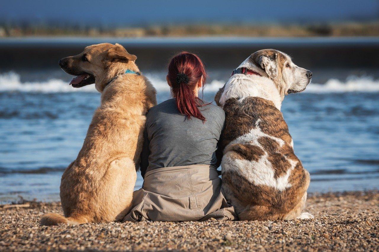 donna e cani