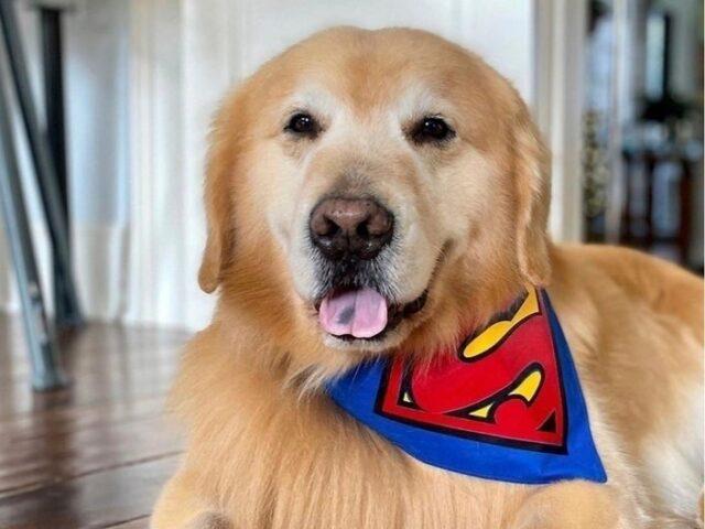 L'ultimo saluto di Scout, il dolce cagnolino