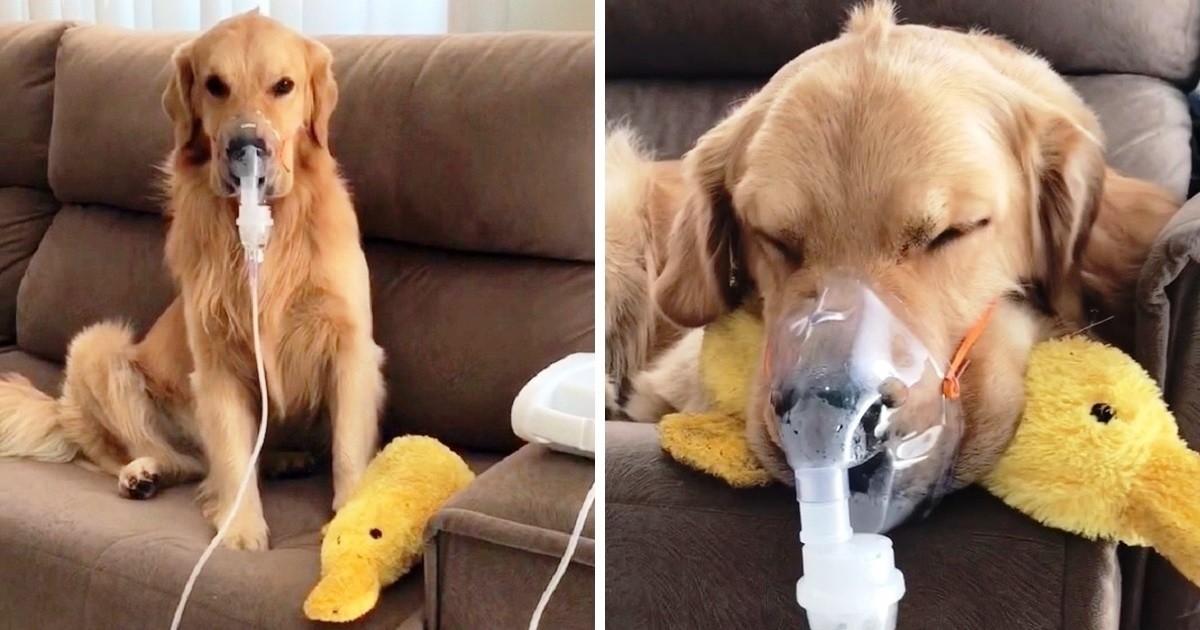 cane respiratore