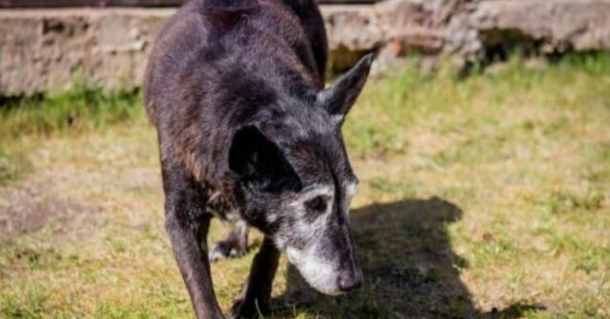 La storia di Maximus, il cane più anziano del mondo