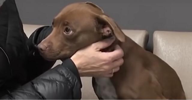 il-salvataggio-della-piccola-Rosie-la-cucciola-che-ha-vissuto-da-randagia-per-molto-tempo