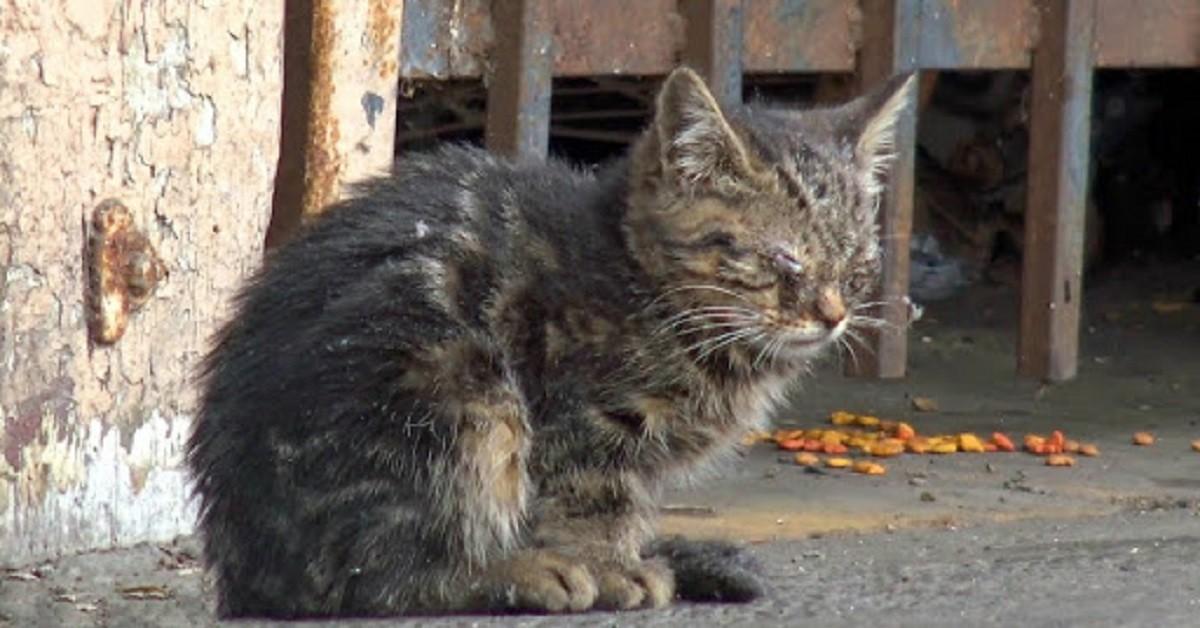 il-salvataggio-di-Kenshi-il-gattino-cieco