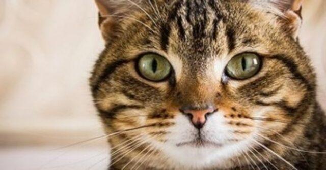 Crema, gatto morto intossicato. I suoi umani lo hanno disinf