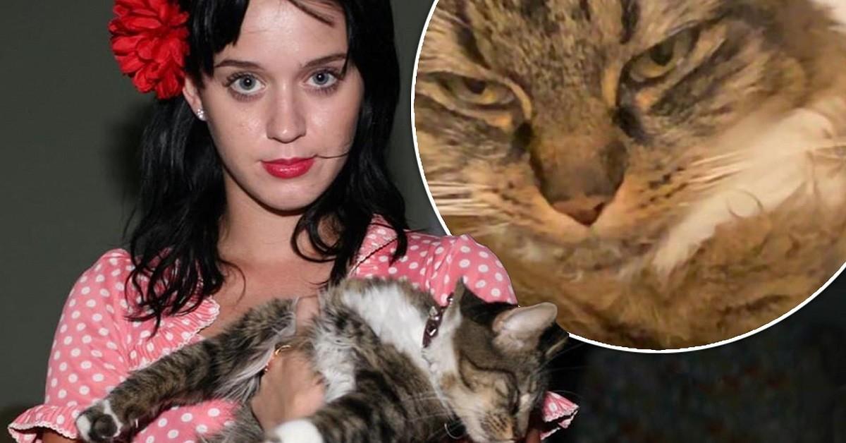 Kitty Purry, la gatta di Katy Perry