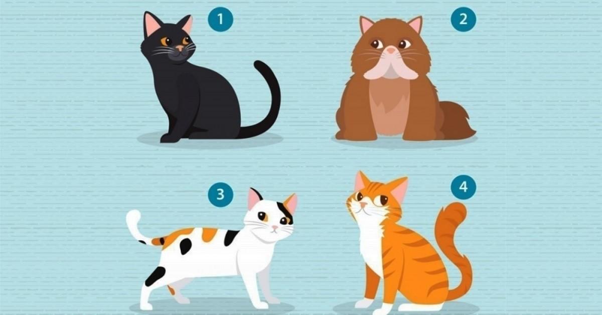 Scegli un gatto e ti dirà di più sulla tua personalità