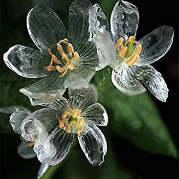 skeleton-flowers