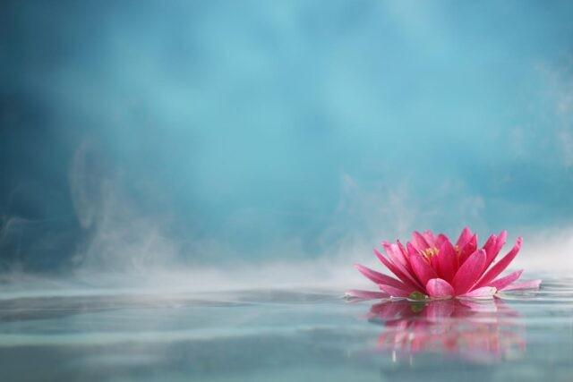 fiore di loto che galleggia