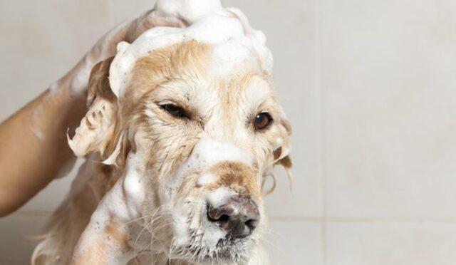 Riapertura toelettature per cani