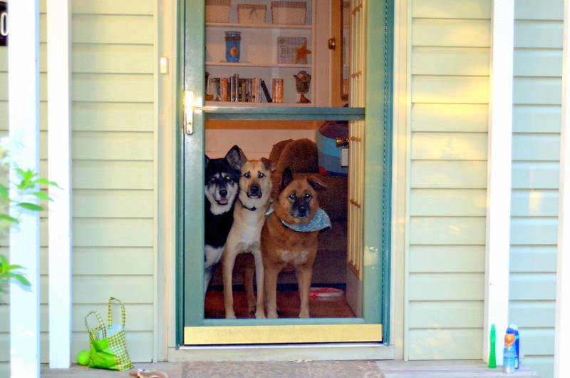 Cani a casa