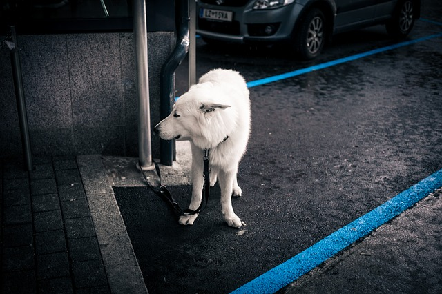 Cane legato in giardino