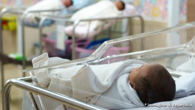 Ascoli neonato schiacciato