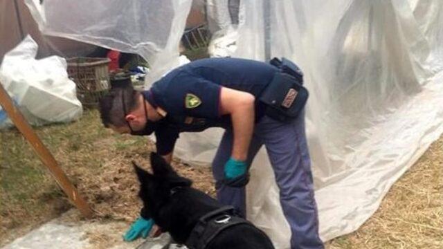 Bologna bimba cade scoperta piantagione di marijuana