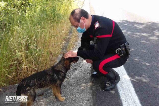 cane salvato dai carabinieri
