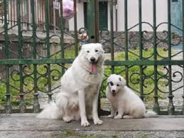 La Spezia, Boris è stato adottato