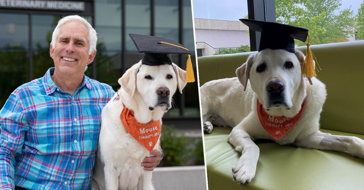 Moose il cane con la laurea