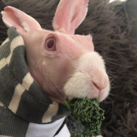 La storia del coniglio senza pelo, Mr Bigglesworth