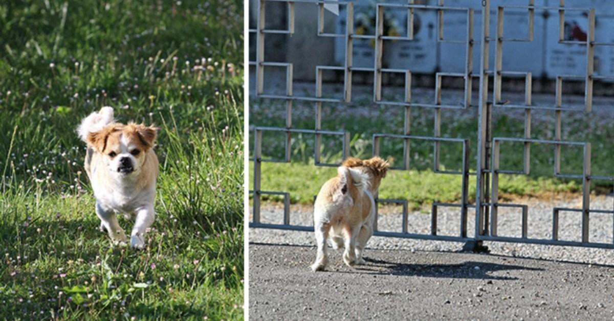 La storia di Oliver, il cane che va al cimitero