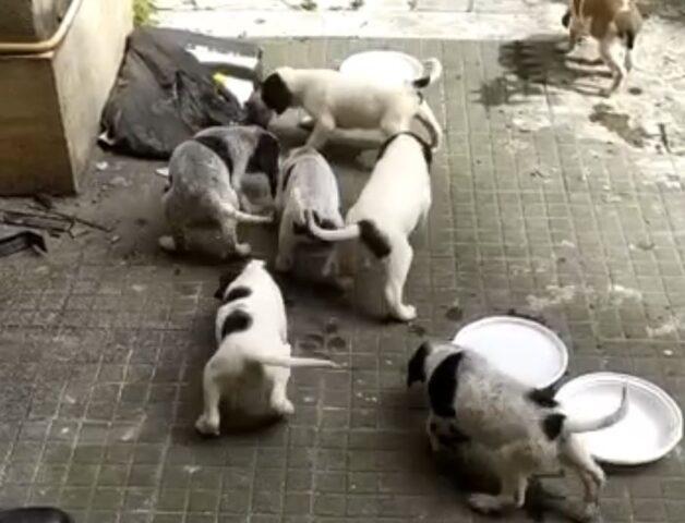 Roma abbandonate 7 cagnoline
