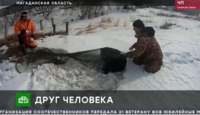 Russia cane abbandonato