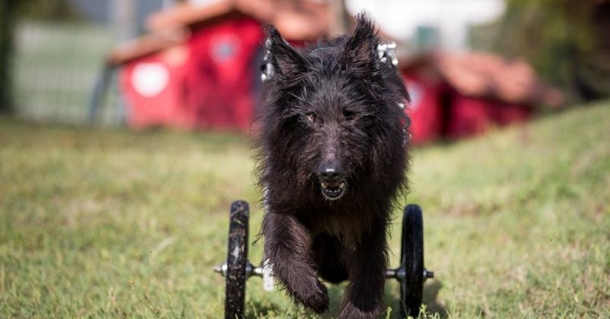 Trento cane grave disabilità