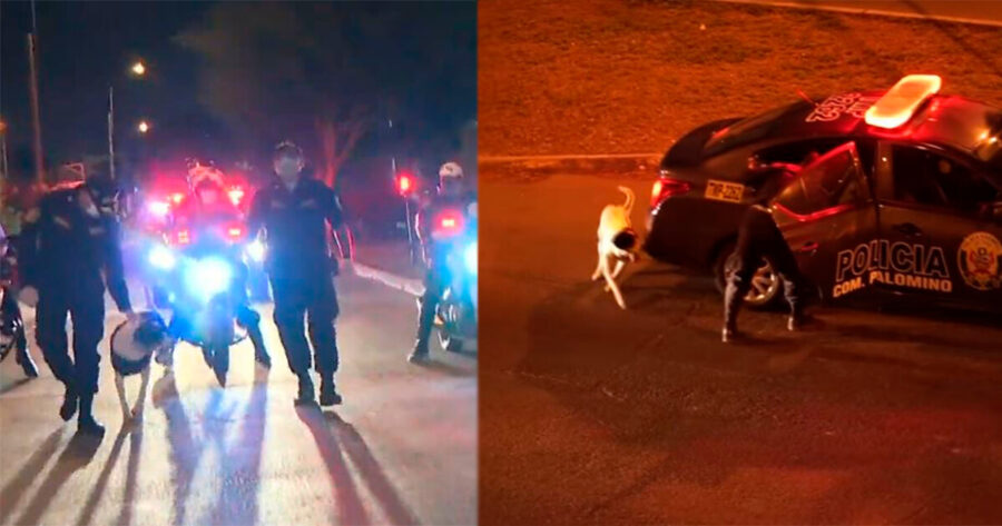 Polizia adotta un cane di strada