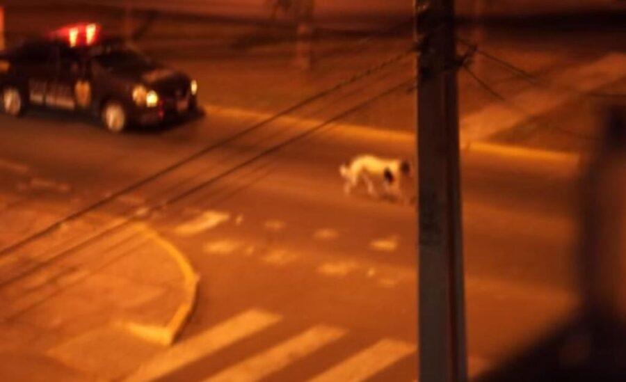 Il cane Manchas