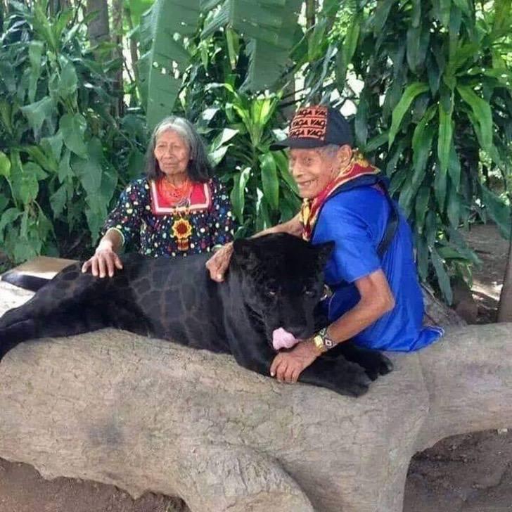 Coppia di anziani signori adotta un giaguaro