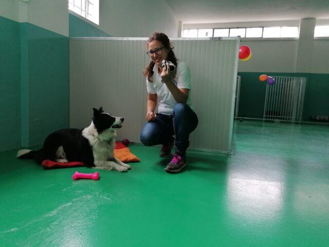 Il nuovo asilo per cani