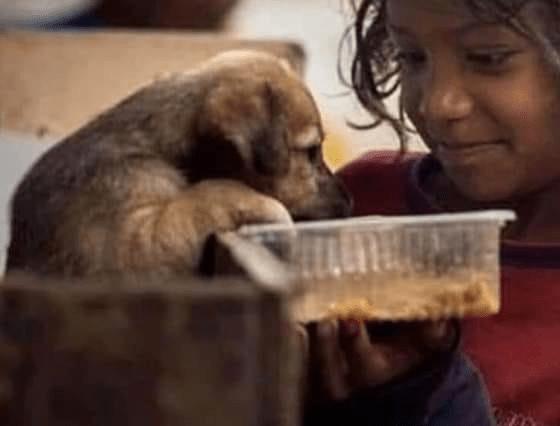 Bambina condivide il cibo con il cane