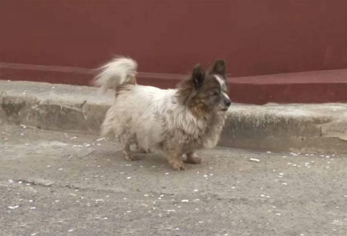 la cagnolina Bokshil