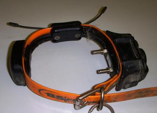 Collare elettrico ad un cane a Caltrano