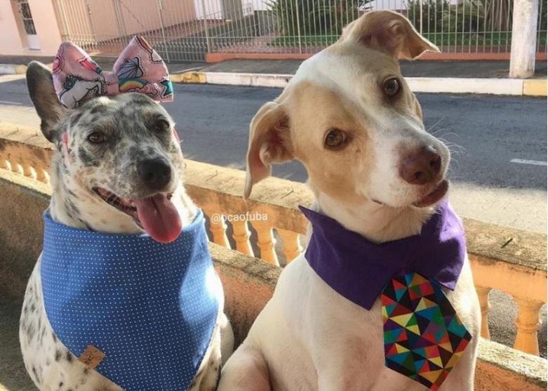 I due cani di casa
