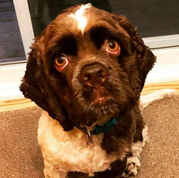 Max il cane