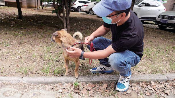 Proprietario muore di Coronavirus, cane lo aspetta