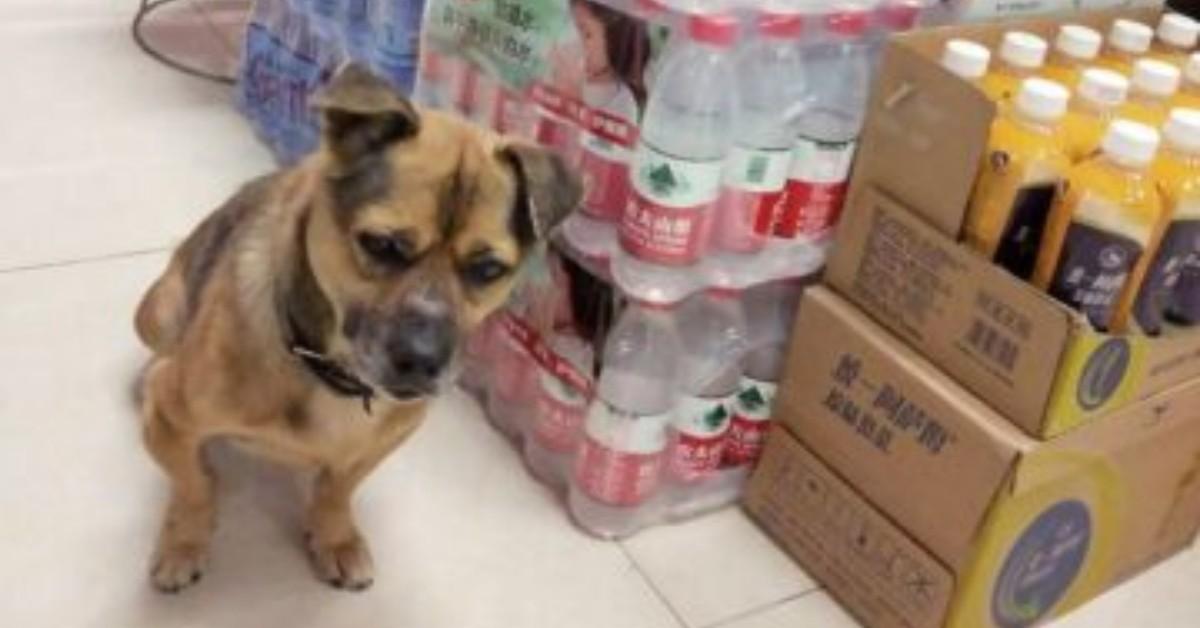 Cane aspetta per tre mesi, fuori l'ospedale, il suo proprietario morto di Coronavirus