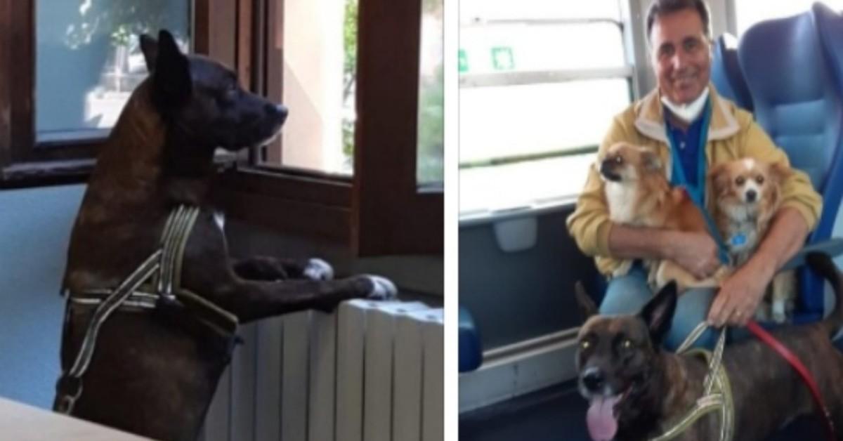 Cane difende ragazza svenuta sul treno