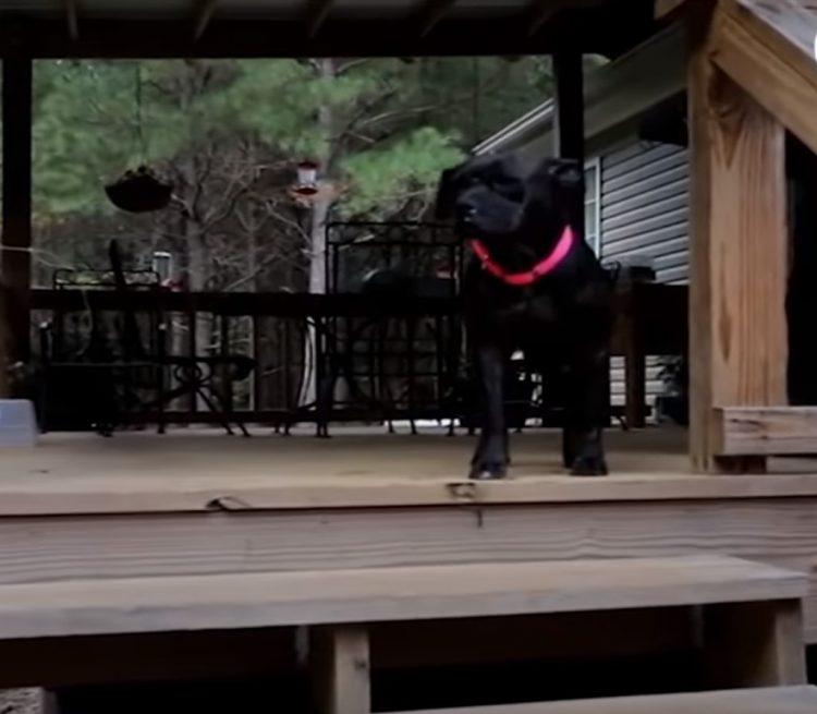 Betsy, il cane con l'anca rotta
