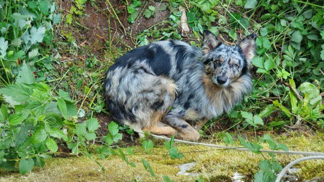 Bosco Chiesanuova, cane gettato in un dirupo