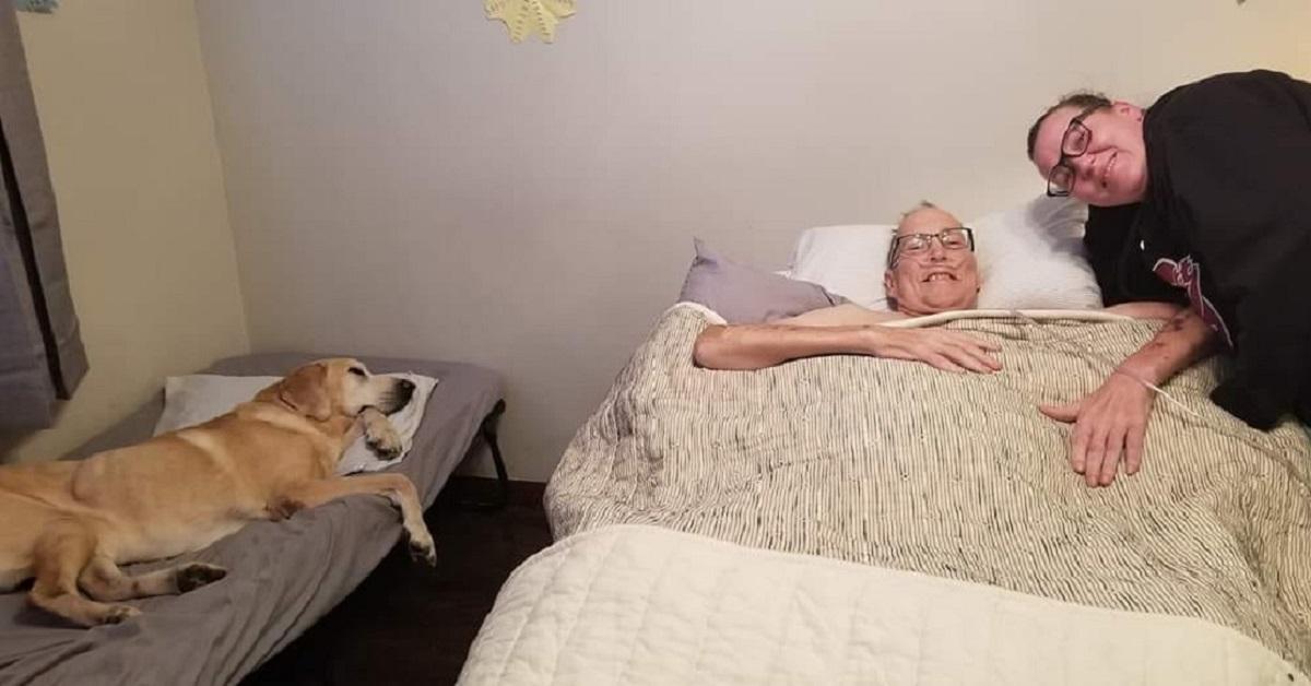Cane labrador si spegne un ora prima del suo amato umano (VIDEO)