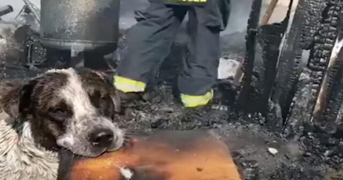 Cane piange davanti alla sua casa distrutta