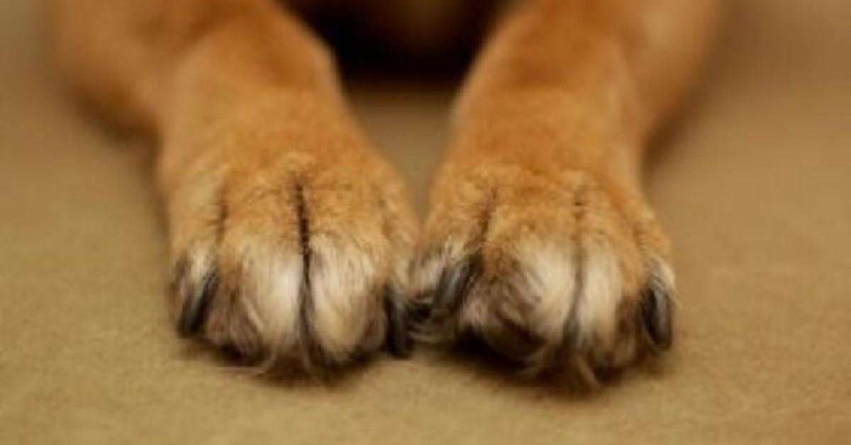 Como, cane preso a bastonate