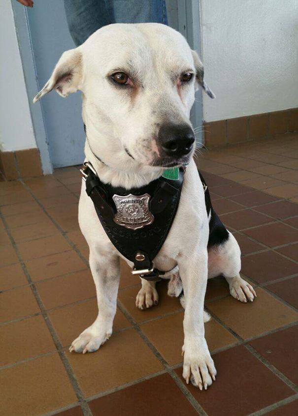 Il cane Gorgi adottato dalla polizia