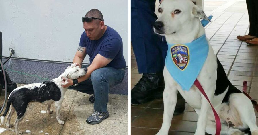 Cane randagio adottato dalla polizia