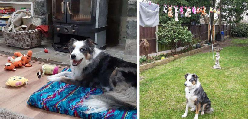 Giochi del cane lavati