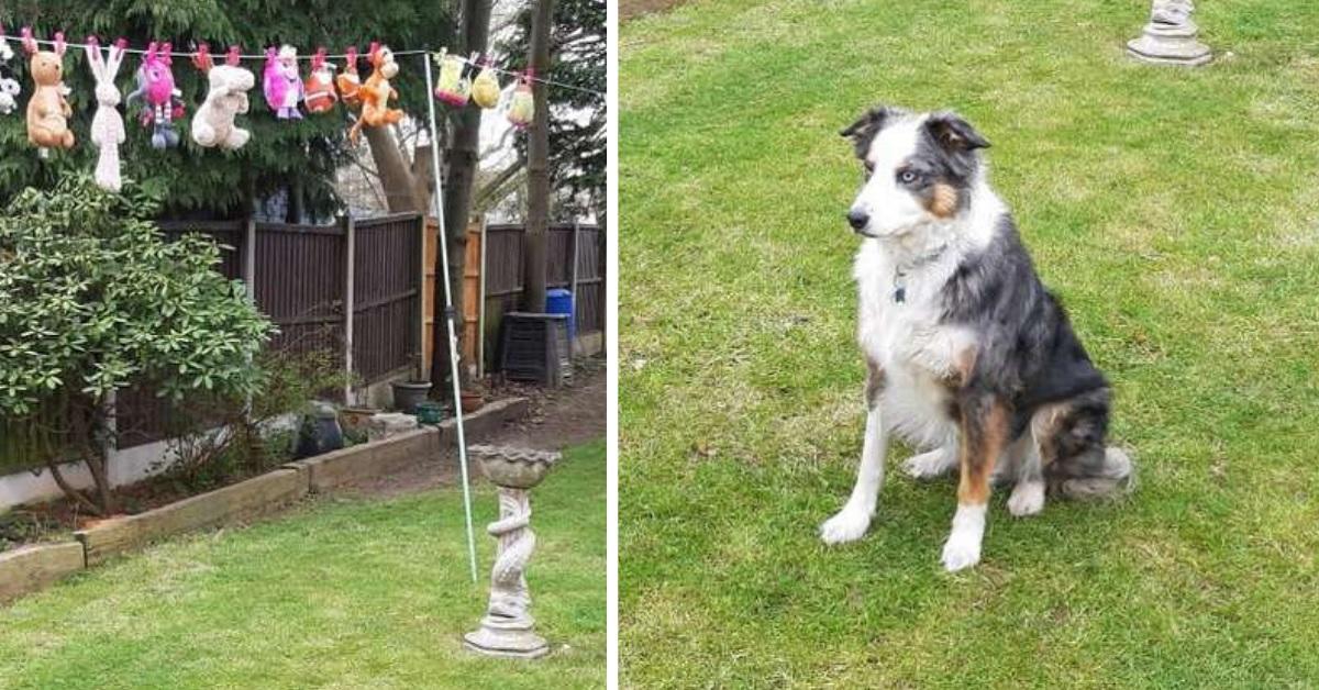 Cane rifiuta di lasciare i suoi giocattoli mentre asciugano al sole