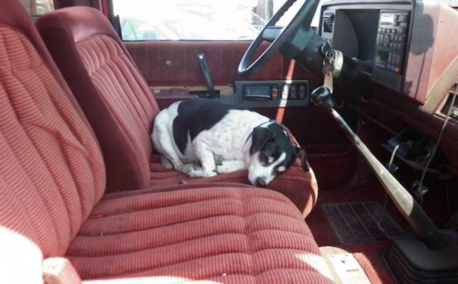 Cane sul camion